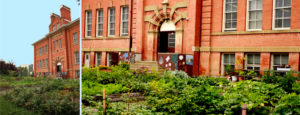 community garden outside E4C main building, alex taylor school